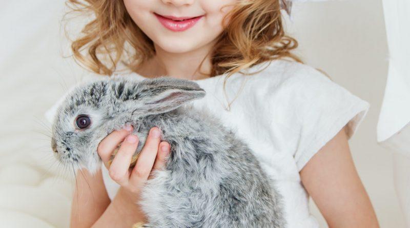 Fillette avec un lapin