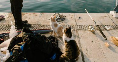 Chats mangeant du poisson